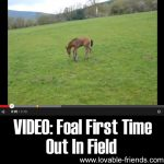 VIDEO: Foal First Time Out In Field