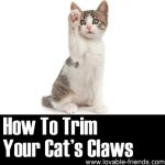 How To Trim Your Cat's Claws