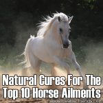 Natural Cures for The Top 10 Horse Ailments