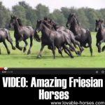 VIDEO: Amazing Friesian Horses