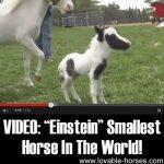 """VIDEO: """"Einstein"""" Smallest Horse In The World!"""