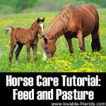 Horse Care Tutorial: Feeds and Pasture