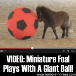 VIDEO: Miniature Foal Plays With a Giant Ball!