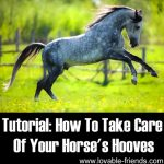 Tutorial: How To Take Care Of Your Horse's Hooves