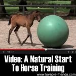 A Natural Start to Horse Training