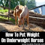 How To Put Weight On Underweight Horses