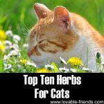 Top Ten Herbs For Cats