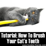 Tutorial: How To Brush Your Cat's Teeth