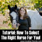 Tutorial: How To Select The Right Horse For You