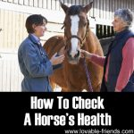 How To Check A Horse's Health