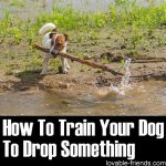 How To Train Your Dog To Drop Something