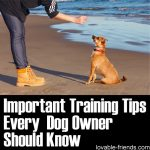 Important Training Tips Every Dog Owner Should Know